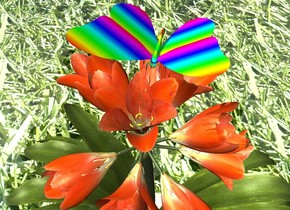 There is a rainbow butterfly on a potted plant. ground is grass.