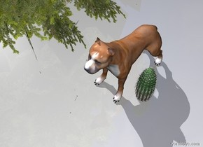 The big dog is next to the cactus. A plant is a foot away from the cactus.