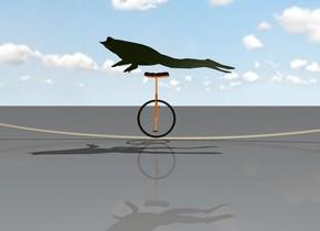 frog on a unicycle