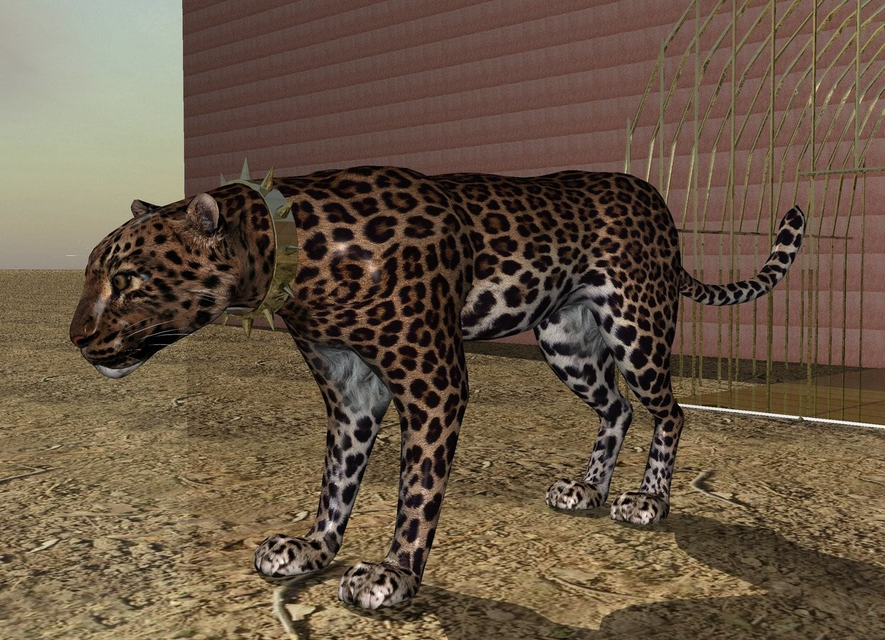 Input text: There is a leopard two feet in front of a  very big rusty dark gold cage. The leopard is on the ground. The cage is 2.5 feet in the ground. The leopard is one inch in front of the cage. There is a rusty dark gold collar 52 inches in front of the cage. The collar is 12.25 inches in the air. The ground is dirt. There is a  dark gold very small floor on the ground. The floor is 2 feet behind the leopard. There is a big rusty copper wall behind the cage.
