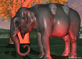 a elephant.a 2 feet tall first head is -20 inches right of the elephant.the head is facing right.the head is 5 feet above the ground.a second 2 feet tall head is 6 inches behind the first head.the second head is facing right.the first head is grey.the second head is grey.a tree is 10 feet left of the elephant.a first red light is right of the elephant.a second red light is 6 inches behind the first red light.