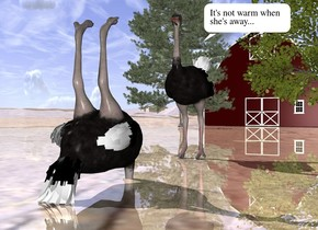 the first small ostrich is 30 feet in front of the small barn. the second small ostrich is 2 feet in front of the first ostrich. it is facing the first ostrich. the second ostrich is upside down. the second ostrich is 1 feet in the ground. the ground is shiny dirt. three small trees are in front of the barn.