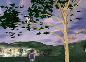 A cat is on a tree. a woman is in front of the tree. the woman is facing north. the woman is 7 feet to the left of the tree.