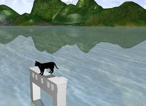 Black cat on shelf