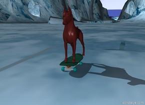 brown dog on skateboard