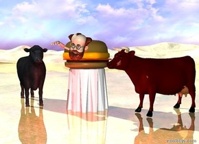 a table.a  2 feet tall hamburger is on the table.a 2 feet tall man is -20 inches above the hamburger.the man is -42 inches in front of the hamburger.a first cow is 1 inches left of the table.the first cow is facing southeast.a second cow is 1 inches right of the table.the second cow is facing southwest.a red light is 1 feet in front of the table.the ground is shiny grass.the sun is antique silver.