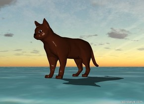the cat is on the ocean