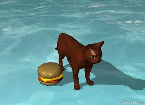 the cat holding a burger on the ocean