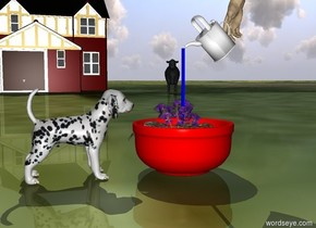 The large dog is in front of a giant red bowl. The dog is facing the bowl. A flower is in the bowl. The white watering can is -14 inches behind the bowl. The watering can is facing left. The watering can is 1 foot over the bowl. The watering can is leaning 45 degrees to the left. The small blue stick is 0.5 inch in the bowl. The ground is grass.. A house is 50 feet to the left of the bowl. The house is facing the bowl. A large hand is 1 inch in the watering can. The hand is -5 inch behind the watering can. The hand is tan. A cow is 3 feet behind the house. The cow is 5 feet to the right. The cow is facing the bowl.