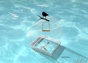 the [meta] square fits in the shiny birdcage. the black bird is on the birdcage. the ground is water.