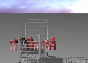 8 red puppies inside a shopping cart
