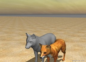 A fox. A small white and grey wolf. A sea is behind of the Wolf.The wolf and the fox are standing on a beach. A sea.
