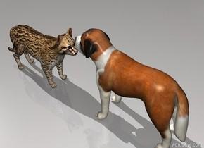 a cat is facing a dog. the dog is facing the cat.