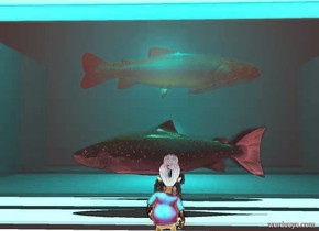 a 1st white wall is behind a white floor. a 2nd white wall is to the left of the floor. it is facing right. a 3rd white wall is to the right of the floor. it is facing left. the sky is white. it is noon. a 1st 2 foot tall green fish is in front of the 1st wall. it is 4 feet above the floor. it is facing right. a 1st glass wall is 1 foot in front of the fish. it is -1 inch above the floor. a gigantic white wall is 2 feet in front of the floor. a 2nd 2 foot tall green fish is in front of the 1st glass wall. it is 1 foot above the floor. it is facing left. a 2nd glass wall is 1 foot in front of the 2nd fish.it is -1 inch above the floor. 3 teal lights are 10 feet above the floor. a 2 foot tall boy is 1 foot in front of the 2nd glass wall. he is facing back.