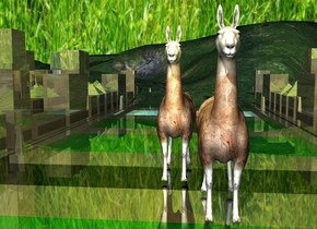 a shiny city block.  sky is [grass]. a 1st enormous llama is -70 feet above the city block. it faces left. a 2nd enormous llama is in front of and -10 feet to the left of the 1st llama. It faces left. a 1st gold light is 5 feet to the left of and -2 feet above the 1st llama. a 2nd gold light is 5 feet to the left of and -2 feet above the 2nd llama.