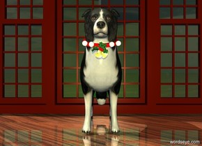 a border collie. a 1 inch tall and .9 foot wide and .9 foot deep red tube is -1 feet above and -1.4 foot in front of the dog. it leans to the front. a small ornament is in front of and -1.5 inch beneath the tube. a 1st very tiny shiny white sphere is to the right of and -1.6 inch above the ornament. a 2nd very tiny shiny white sphere is -1.3 inch above and .2 inch to the right of and -1.8 inch in front of the 1st sphere. a 3rd very tiny shiny white sphere is -.9 inch to the left of and -1.6 inch above the ornament. a 4th very tiny shiny white sphere is -1.3 inch above and .2 inch to the left of and -1.8 inch in front of the 3rd sphere. a very large window is behind the dog. the ground is shiny wood.a large [christmas] wall is 2 feet behind the window. a green light is in front of the wall. a gold light is 10 feet in front of the ornament.