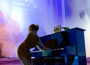 A dog is -1.6 feet in front of and -3.9 feet above a -90% dark shiny piano. It is facing the piano. It is leaning 50 degrees to the back. The ground is shiny and purple. The sky is [music]. A bottle is on the piano. A bottle is right of the bottle. A bottle is right of the bottle. A bottle is right of the bottle. A bottle is 1 foot right of and in front of the bottle. It is leaning 90 degrees to the front. It is facing south. Camera light is black. A large light is in front of and left of the dog. A pink light is above the dog.