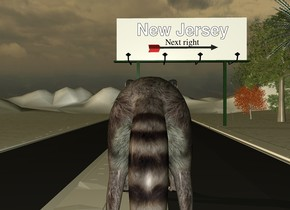 the 1st extremely long road is next to a 2nd extremely long road. the white billboard is on the 2nd road. the huge arrow is in front of and -7 feet above the billboard. it is facing right.  the tall [snow] ground. the huge raccoon is to the right of the 1st road. it is 42 feet in front of the billboard. it is facing back. it is dusk. the 3 small trees are to the right of the billboard. 3 very small trees are behind the small trees.