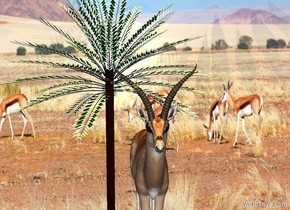 a 40 foot tall gazelle is to the right of a 55 foot tall and 40 foot wide date palm. a 60 foot tall and 100 foot wide wall is behind the gazelle. it is 100 foot wide [desert]. the ground is [desert]. it is noon. the sun is tangerine. a dim beige rose light is 10 feet above gazelle.