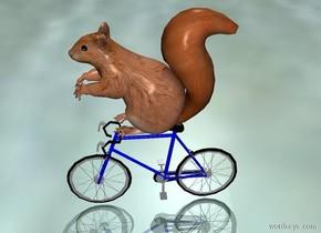 Squirrel on very little bike