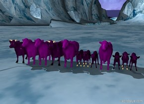 100 purple cows