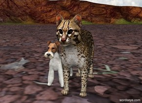 Dog with a cat in the left