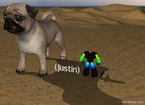 (Justin).  a rainbow  robot.  gigantic pug.   fish.