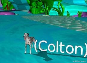 (Colton) dalmatian