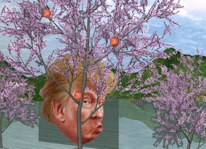 The humongous head is behind and -10 feet right of the 1st large peach tree. 2nd huge peach tree is right of the 1st peach tree. 3rd large peach tree is  -8 feet right of the 2nd peach tree. 1st giant peach apple is -5 feet in front of and -30 feet above the 2nd peach tree. 2nd giant ugly peach apple is 6 feet right of and -19 feet above the 1st apple. 3rd giant fat peach apple is 6 feet right of and 8 feet above the 2nd ugly apple.