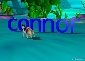"""puppies. the blue """"connor"""" is 2 feet behind the puppies."""