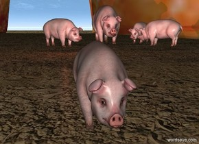 a bacon.the bacon is 100 feet deep.the bacon is 50 feet wide.the bacon is 25 feet tall.a pig is -50 feet in front of the bacon.the pig is -20 feet left of the bacon.a 1st 1 feet tall pig is 3 inches right of the pig.the 1 feet tall pig is facing southwest.a 2nd 1 feet tall pig is 6 inches in front of the pig.the 2nd pig is facing northwest.the ground is dirt.a 3rd 1 feet tall pig is 2 feet left of the 2nd pig.the 3rd pig is facing southeast.a brown light is 1 feet in front of the pig.a 1st 6 inch tall pig is 6 feet in front of the 3rd pig.
