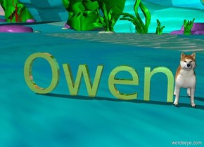 """gold """"Owen"""". the dog is to the right of """"Owen""""."""