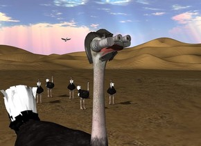 a [metal] optical device is -.57 feet in front of and -.5 feet above a 1st ostrich. the device leans 9 degrees to the back. a 2nd small ostrich is 17 feet behind and 14 feet right of the 1st ostrich. 3rd small ostrich is 3 feet right of the 2nd ostrich. it faces southwest. 4th small ostrich is 5 feet behind and 1 feet left of the 2nd ostrich. it faces the 1st ostrich. 5th small ostrich is 2 feet right of and 1 feet behind the 4th ostrich. it faces the 2nd ostrich. 6th small ostrich is 5 feet behind and 1 feet right of the 2nd ostrich. it faces the 1st ostrich. a branta is 28 feet behind and 17 feet right of the 1st ostrich. it is 10 feet above the ground.