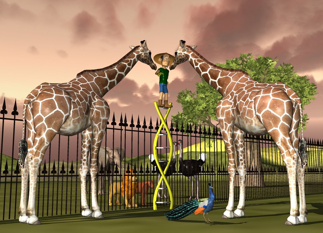 Input text: a 11 feet tall dna.a man is -6 inches above the dna.a 1st giraffe is in front of the dna.the 1st giraffe is facing the man.a 2nd giraffe is left of the dna.the 2nd giraffe is facing the man.a fence is 2 feet behind the dna.the fence is 10 feet tall.the fence is 150 feet long.a 1st lion is 3 feet behind the dna.a 2nd lion is 1 feet right of the 1st lion.a 1st ostrich is 6 feet right of the 2nd lion.the 1st ostrich is facing south west.a 2nd ostrich is 1 feet behind the 1st ostrich.a elephant is 5 feet behind the 2nd ostrich.a peacock is 3 feet left of the 1st giraffe.a tree is 20 feet right of the elephant.the ground is grass.the sun is 50% rust.