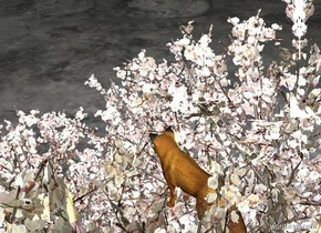 it is evening. the fox is 3 feet in the reflective apricot tree. The peach light is below the fox. The pale blue light is to the left of the fox.