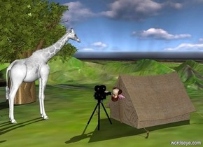 a 500 inch tall white giraffe.a 800 inch tall baobab tree is right of the giraffe.ground is 35 feet tall.ground is 8000 inch wide [steppe].the azimuth of the sun is 150 degrees.a 250 inch tall tent is left of the giraffe.the tent is -900 inch behind the giraffe.the tent is facing north.a 200 inch tall movie camera is 30 inch behind  the tent.a 80 inch tall man is -130 inch behind the tent.the man is facing north.the man is -145 inch above the tent.