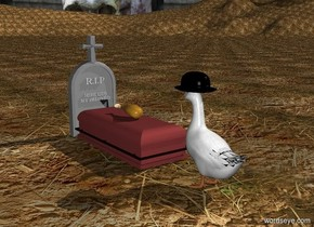 a duck. a small black hat is -6 inches in front of and -0.5 inches above the duck. a small tombstone is 2 feet in front of the duck. it is facing to the duck. a tiny 60% grey coffin is behind the tombstone. a chicken is on the coffin. the ground is soil. the [death] background