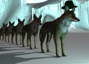 a 1st wolf. a dark green hat is -2.7 inches above the 1st wolf.the hat is -15 inches in front of the 1st wolf.the hat is leaning 5 degrees to the north.a 2nd wolf is -3 inches behind the 1st wolf.a 3rd wolf is -3 inches behind the 2nd wolf.a 4th wolf is -3 inches behind the 3rd wolf.a 5th wolf is -3 inches behind the 4th wolf.the ground is snow.it is morning.a 40% aqua light is 1 feet in front of the 1st wolf.the camera light is dark.