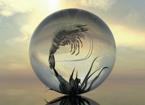 A shiny shrimp is 7.5 inch in a clear sphere. It is facing southeast. The ground is clear. A tiny dark shiny plant is 1 foot in the sphere.