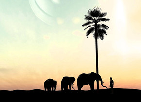 A tree is behind a black elephant. The elephant is facing east. Camera light is black. The ground is black. A black elephant is facing the elephant. It is 2 feet right of and 2 feet in front of the elephant. A black elephant is facing the elephant. It is 14 feet right of and 6 feet in front of the elephant. The ground is 15 feet high. A 10 feet high dark man is 40 feet behind the elephant. He is facing southwest. The sun is beige.
