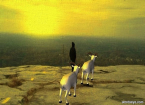 The  [scene]  backdrop. a mountain goat faces northeast. a mountain goat is south of and west of the mountain goat. it faces northeast. sun is lemon.