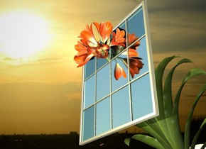 sky backdrop. window. a huge flower leans 45 degrees to the front. it is -3 foot behind and -10 feet above the window.
