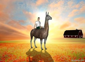[field] backdrop. 80% dark animal. shadow plane. a small person is -2.5 feet above the animal.  sun's azimuth is 40 degrees. sun's altitude is 30 degrees. sun is gold. a tiny barn is 50 feet right of and 20 feet behind the animal.