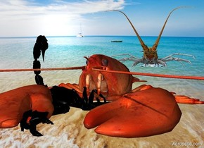 a scorpion faces back. a lobster is -.6 foot right of the scorpion. it faces southwest. a big lobster is .5 foot behind and .5 foot right of  the lobster. it faces southwest. a beach backdrop.