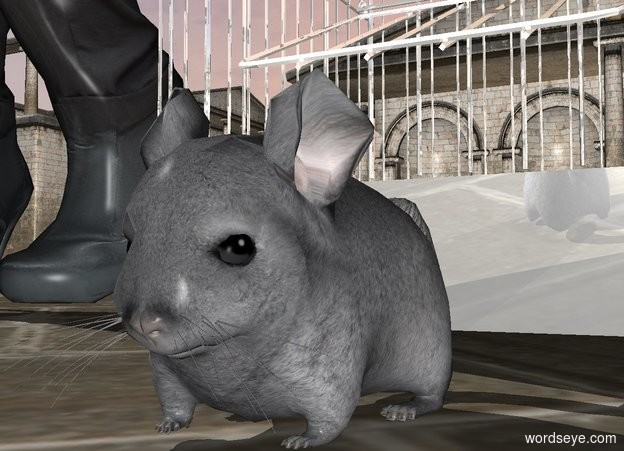 Input text: a chinchilla.a shiny cage is behind the chinchilla.a woman is left of the cage.