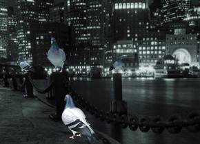 a [pigeon] wall. camera light is black. ambient light is sea mist blue. sun is blue gray. a 1.8 foot tall dull pigeon is -7 feet above and in front of and -5 feet left of the wall. it faces northwest.