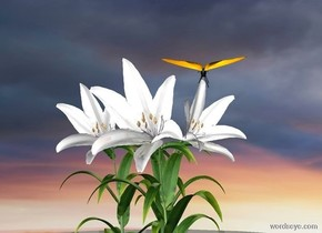 a lily is 500 feet above the ground. its petal is dull white. a lily is -.6 foot right of the lily. its petal is dull white. it faces southeast. a lily is -.9 foot right of and -.5 foot in front of the lily. its petal is dull white. a huge butterfly is .5 foot above and 5 feet behind the lily.  it leans to the front. a tiny lemon chiffon light is above the butterfly. sky is 4500 foot wide [sunrise]