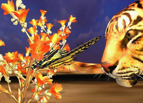 a tiger is 5 feet tall.   a .5 foot tall 70% dark butterfly is .3 foot in front of and -2.7 foot above the tiger. it faces back. it leans to the back. a red orange light is 20 feet above and 20 feet in front of and right of the tiger. camera light is black. a large cactus is left of and -3 foot in front of the butterfly. it is on the ground. a extremely tiny linen light is 1 foot above the butterfly. a tangerine light is 20 feet right of the cactus. ground is [grass]. sun is tan. ambient light is dim linen. it is night.