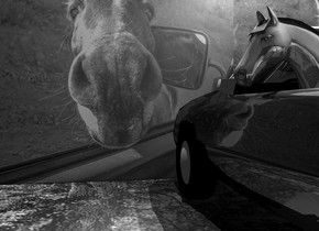 A [mirror] wall is in front of a shiny black car. The car is 4.4 feet high. The ground is 20 feet wide [road]. It is 30% dark. A 4.5 feet high 20% shiny grey horse is -6 feet left of the car. It is facing east. Camera light is black. A light is above and behind the wall. A light is below and left of the light. A light is below and left of the light. A cream light is 4 feet right of and 8 feet above the light. The interior of the car is grey.