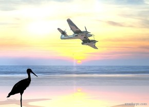 a shiny  [sky] backdrop. camera light is black.  shiny ground. a peach light is on the shiny small airplane. a very large black  bird  is  left of the airplane.  it is facing right. the airplane is facing southeast. it is leaning left. the airplane is 4 feet above the bird.